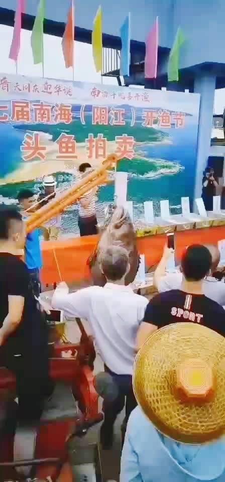 """这条198斤重的""""龙趸鱼"""",是广东省重点保护的水产野生动物"""
