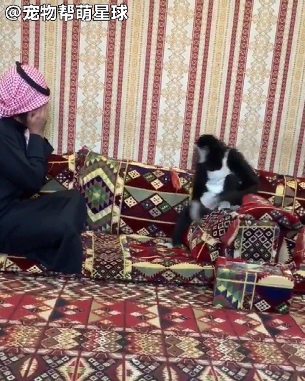 男子Osama非常喜欢动物,于是在沙特阿拉伯从事野生动物的保护工作