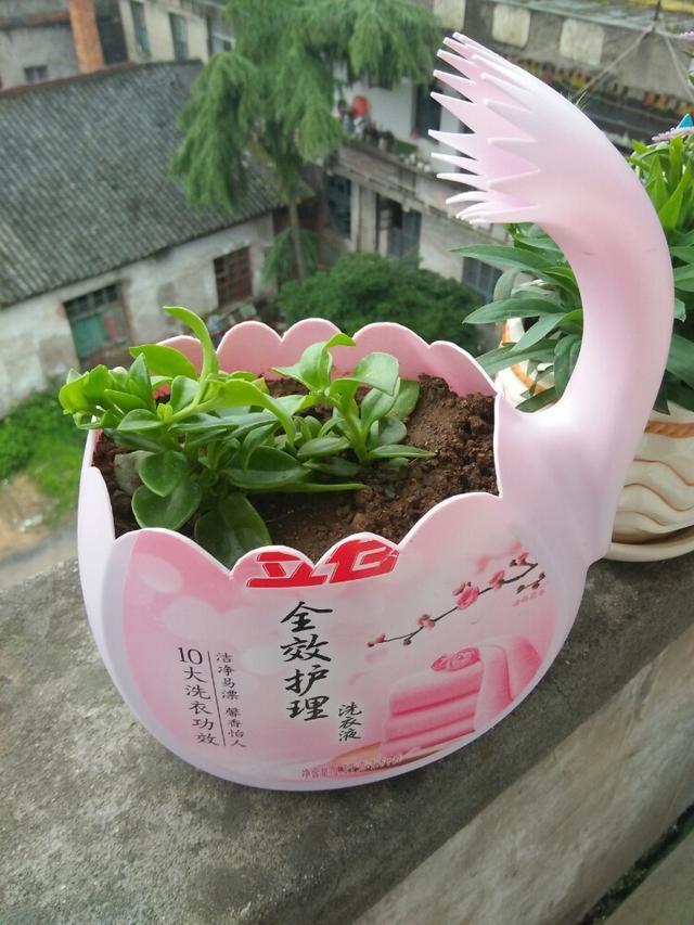 洗衣液桶不要再扔了,用来做花盆特别的好,造型百变,材质又结实图片