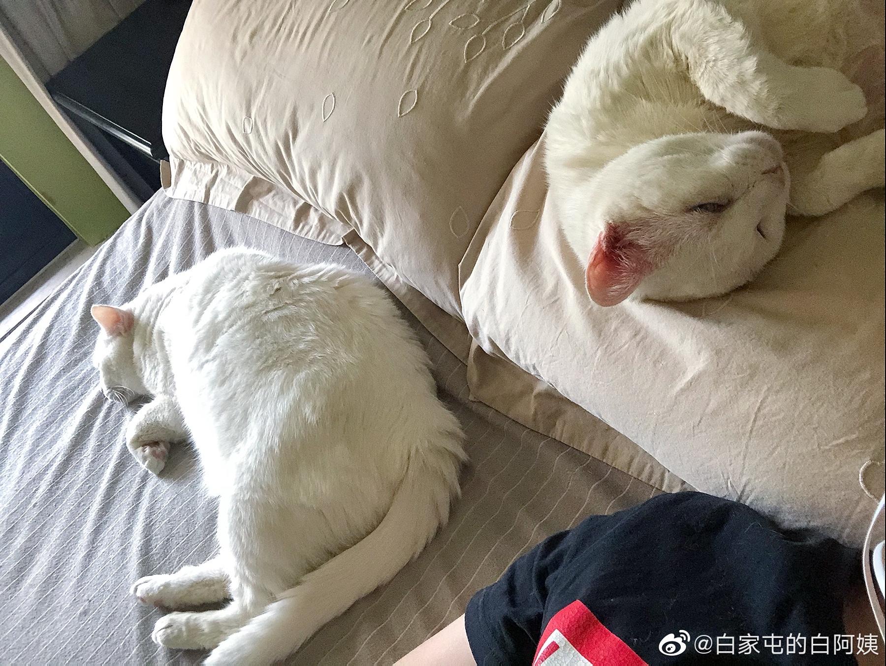 还是我们这边好,正经人和正经猫一起睡