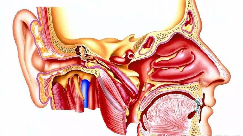 什么是外耳道炎?