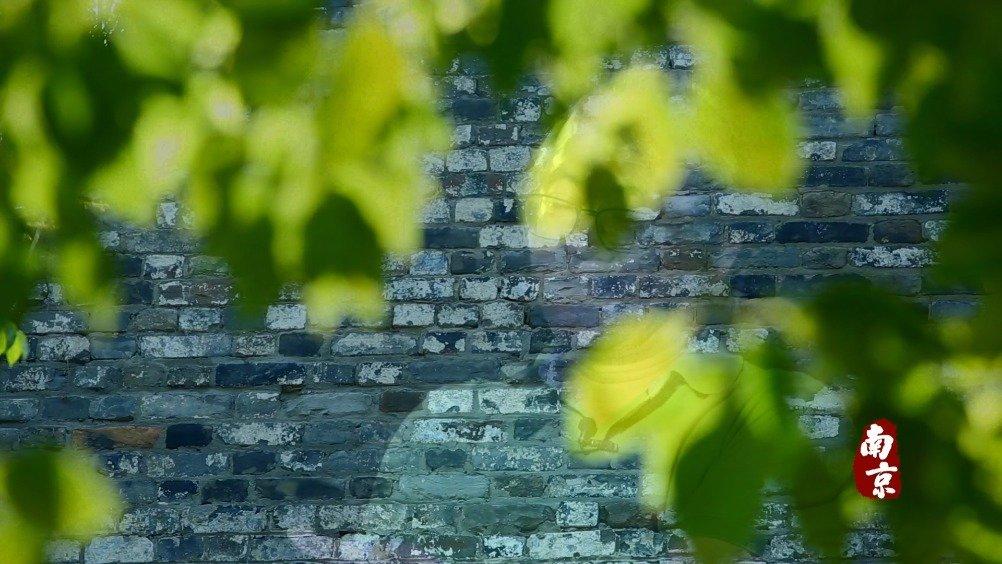 """《一城山河》再回味:《南京》大咖云集 他们都是文化""""导游"""""""