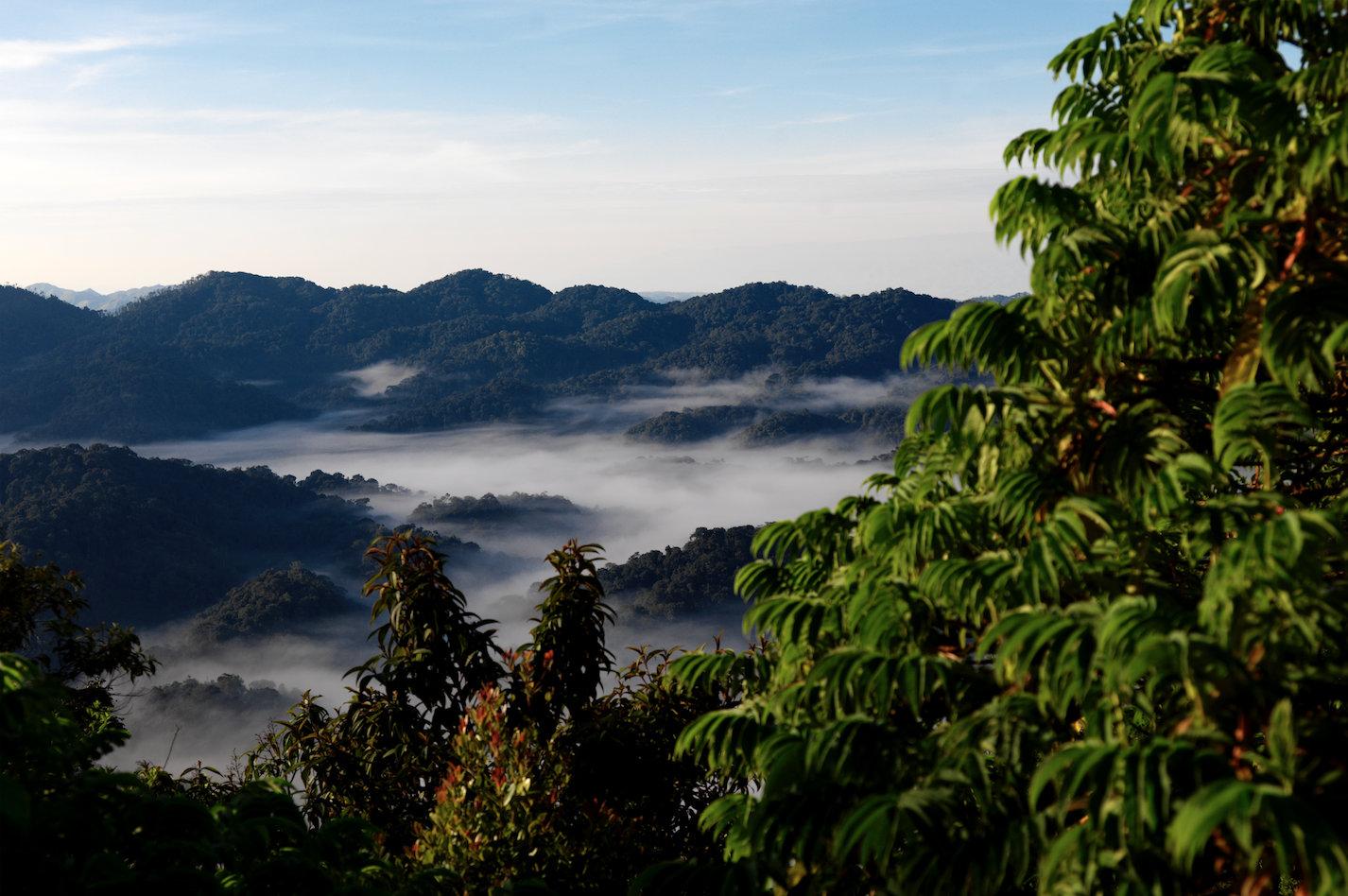 2019卢旺达旅行最全攻略,这个东非国家值得一去!
