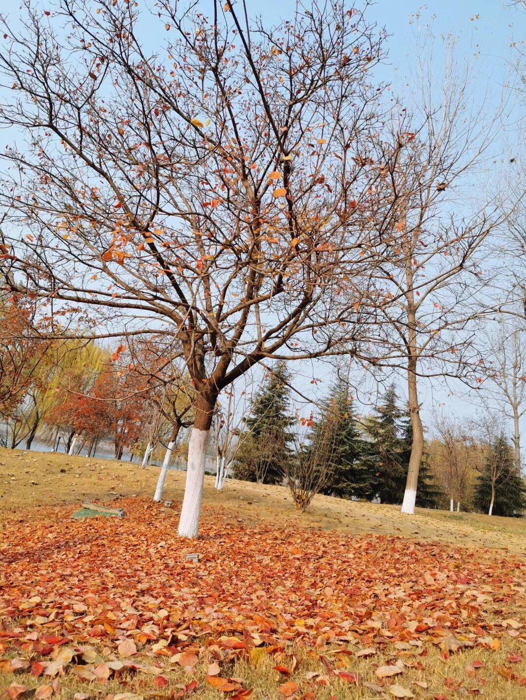 秋冬季简直就是大自然的调色板~