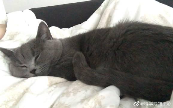 二倍速的猫咪睡觉…她好像是做梦了……
