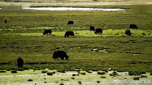 川藏线是这些年很多驴友自驾游的一条黄金路线