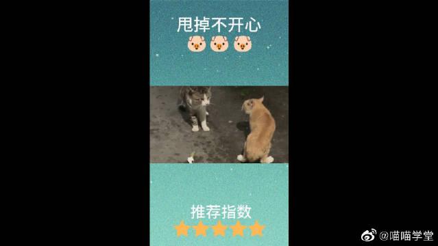 当宠物猫碰上流浪猫,孰强孰弱即见分晓,毕竟橘猫混过江湖啊!