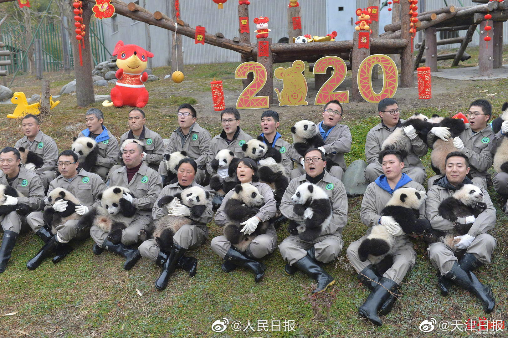 前方高萌!20只卧龙熊猫宝宝集体拜年