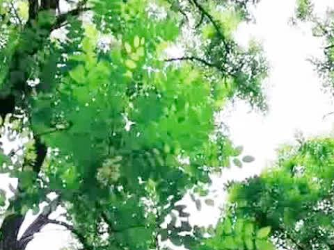 微风吹拂着树叶,放松身心空灵感受大自然