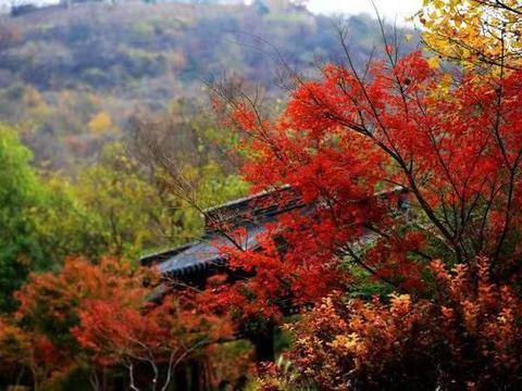 赏尽金陵的秋——栖霞山进入最佳赏枫期