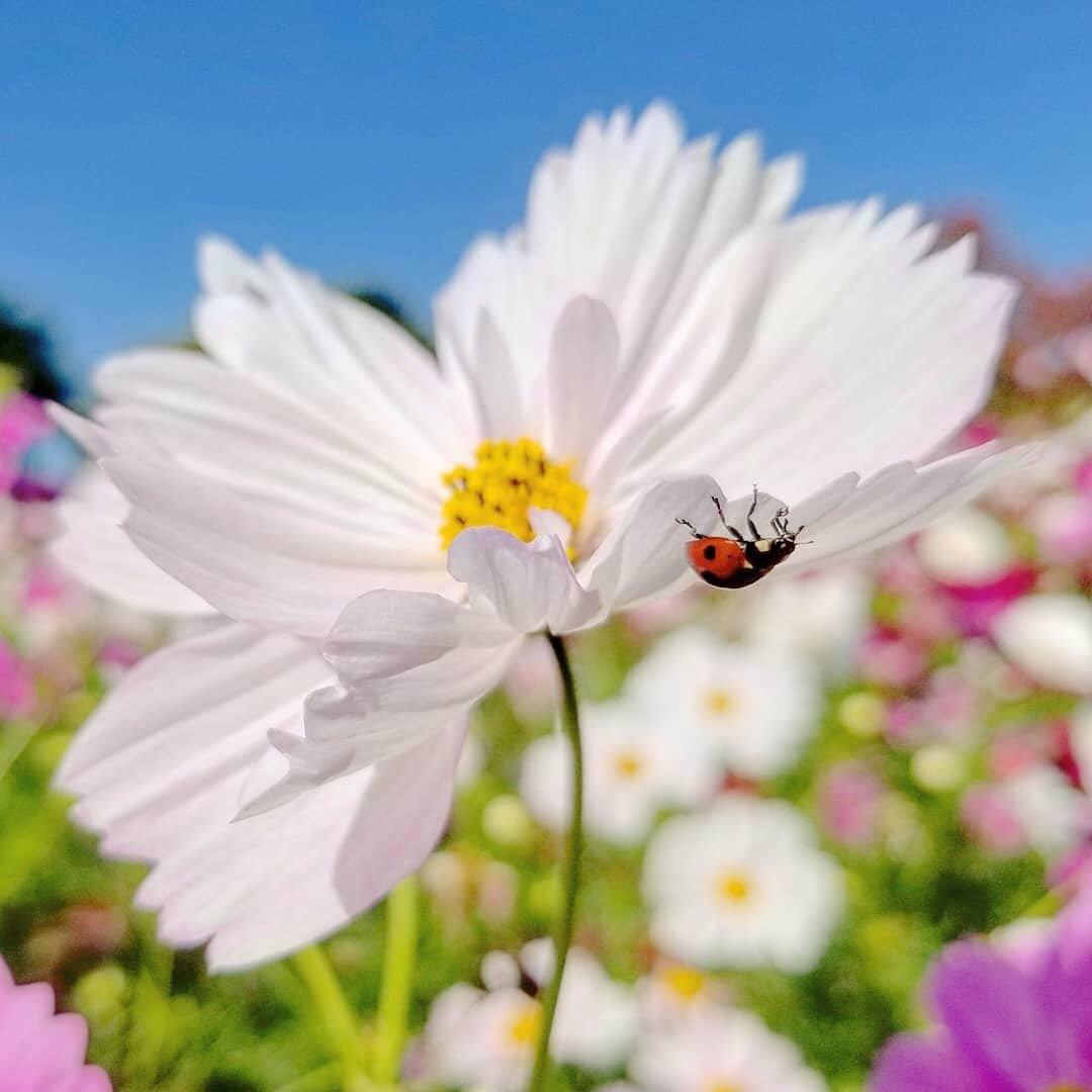 自在生长的美丽花卉和灿烂的阳光,希望能带给你一点好心情~ins