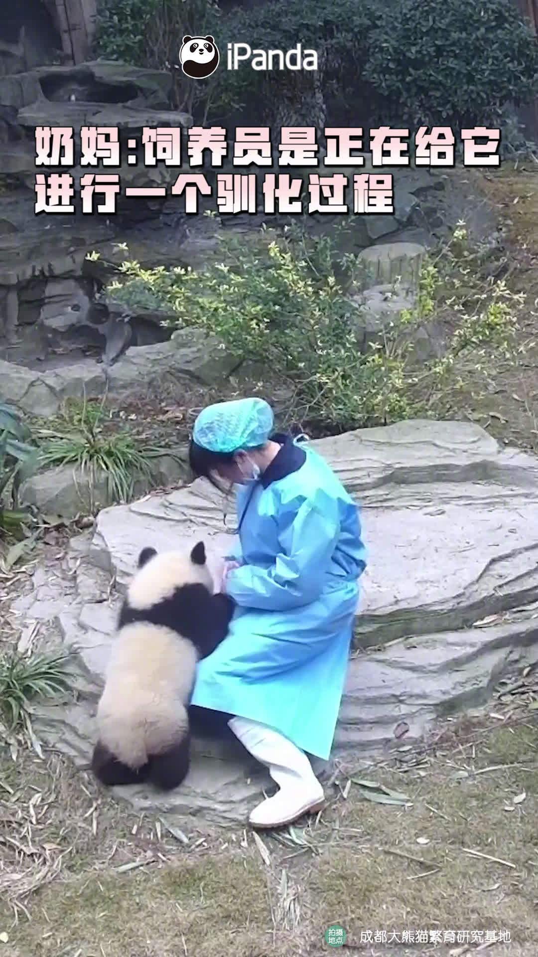 奶妈为了熊孩子的身体健康也真是煞费苦心。请问需要助手吗