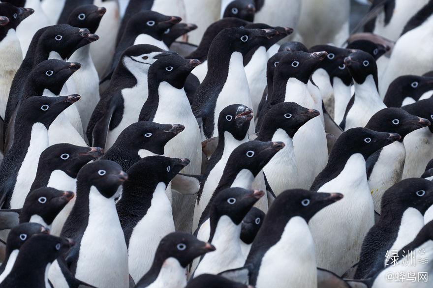 暖冬下的企鹅生存作者:Alber 完整图集→