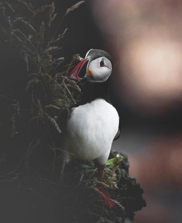 冰岛的小动物们 ins:joe_shutter