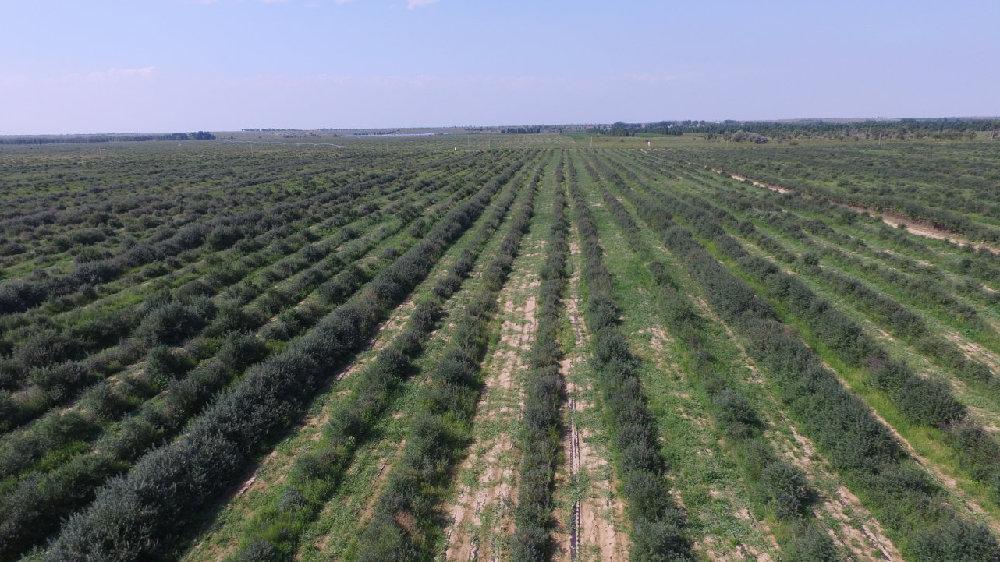 """鄂尔多斯市发展高质量林业打造""""绿色银行"""""""