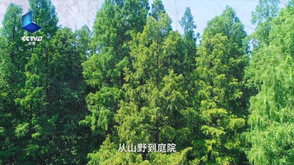 在《影响世界的中国植物》之《园林》一集中