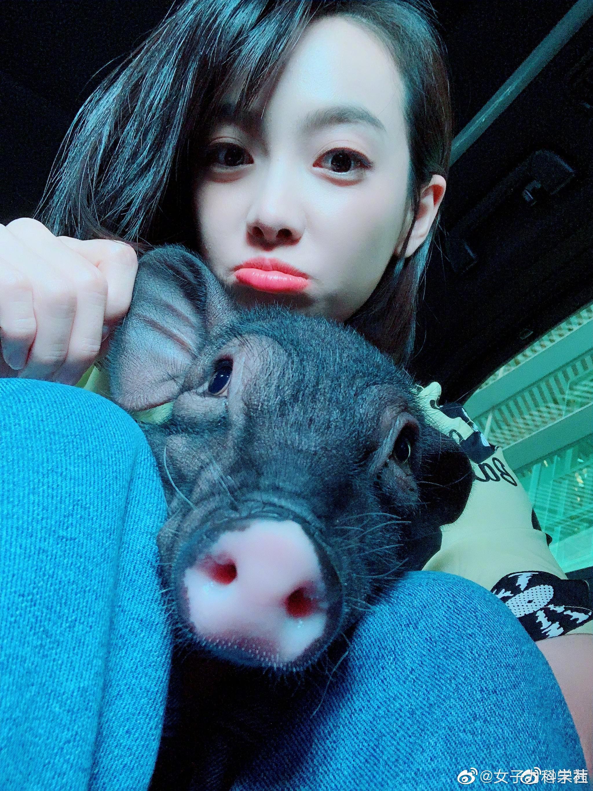 宋茜井柏然也养猪呀宠物新潮流
