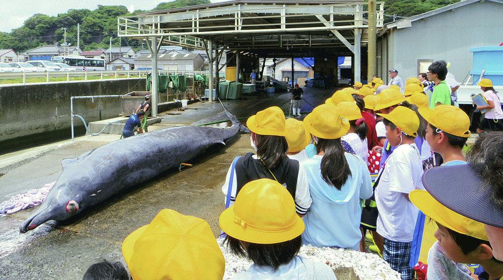 日本千叶县组织小学生现场看鲸鱼解剖,称让孩子为家乡感到自豪