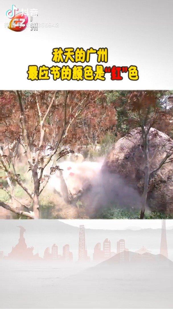 金秋十月,花城广州的秋色不单调