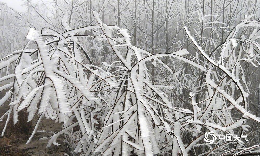 桂林金紫山雾凇美成水墨画