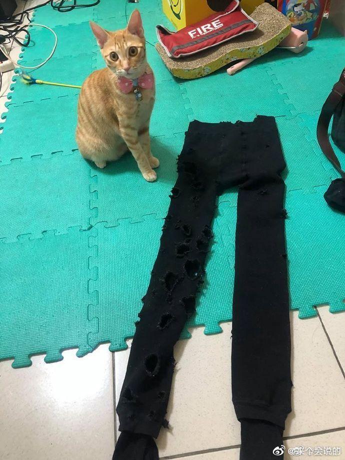 网友:天气冷了,翻出厚袜子来穿,没想到已经被猫咪咬成这样了!