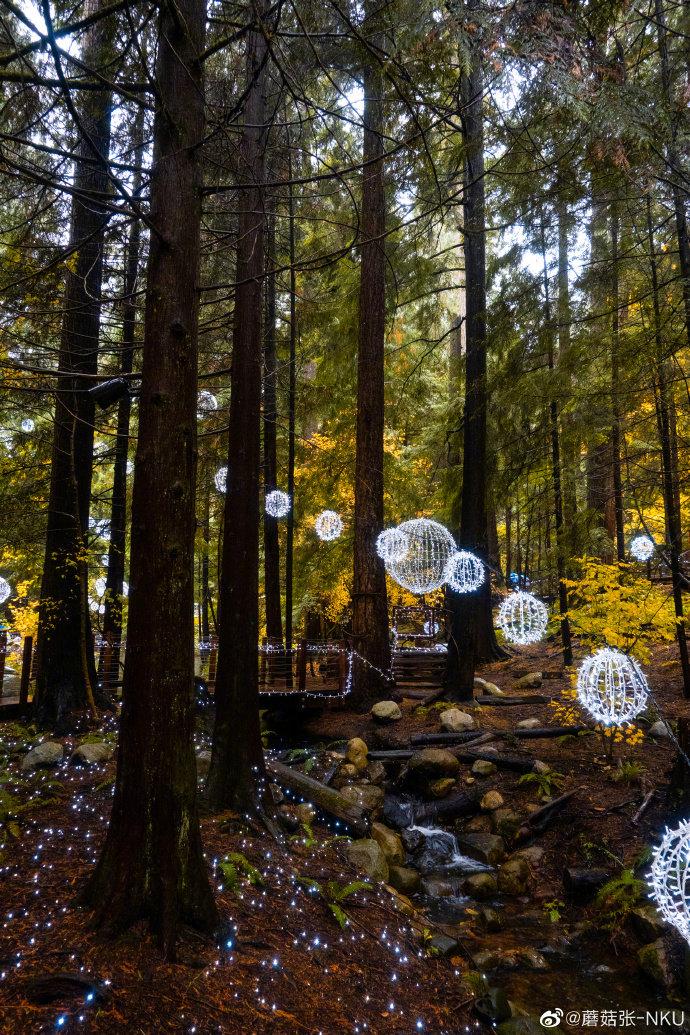 童话般的森林!走进加拿大卡佩兰奴吊桥公园,眼前的森林会让你惊呆