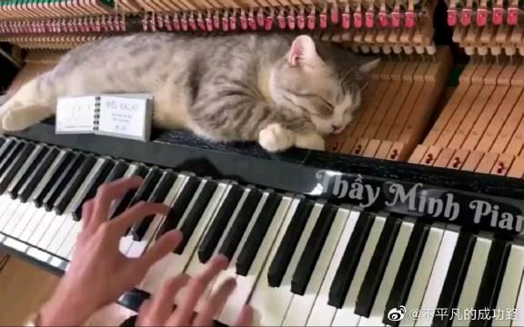 可爱的喵喵喵,躺在钢琴上很舒服的样子,好想揉一揉啊
