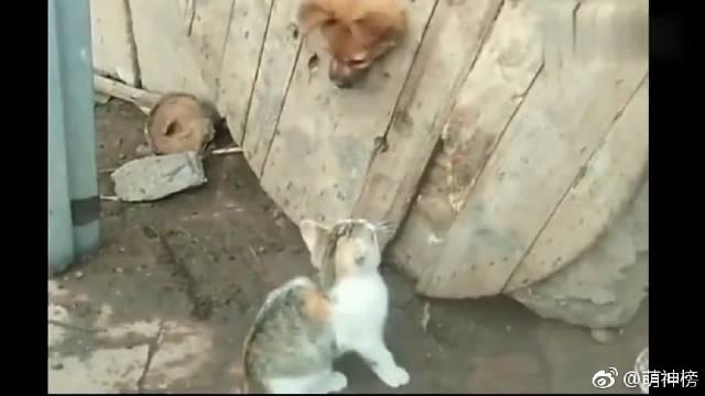 叶孤猫和西门吹狗要v时间时间之巅了!你们站谁赶的紫禁搞笑图片图片