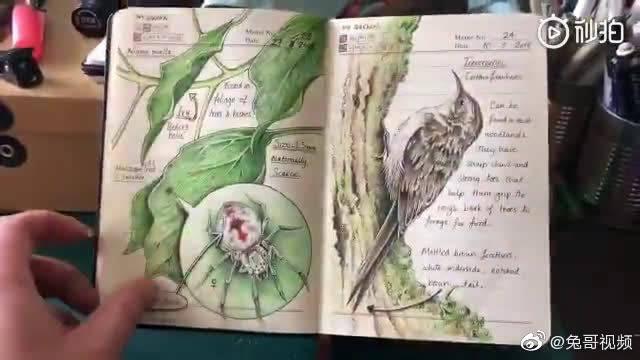 一位外国野生动植物插画师,分享了自己手绘的笔记.....