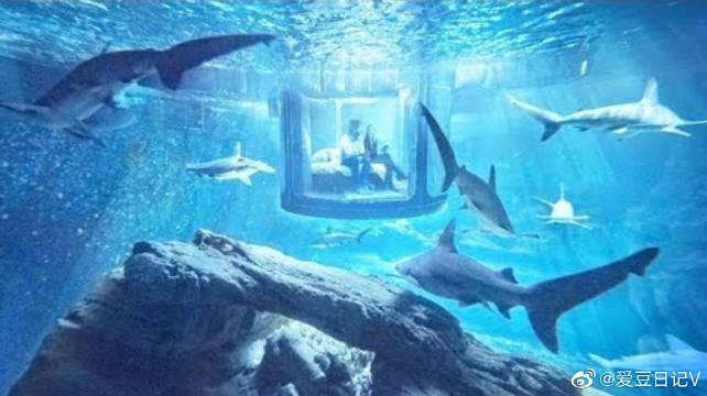 世界上最恐怖的水下客房,与35条鲨鱼同睡,你有勇气去住吗