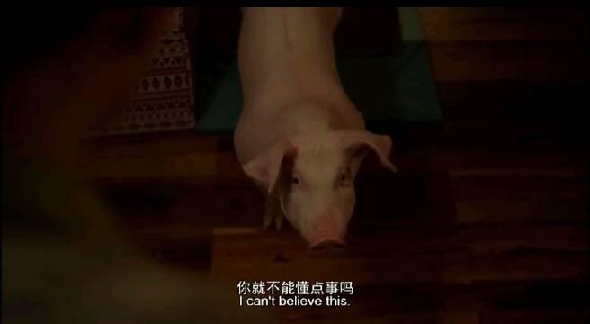 为了保护女主人,宠物猪解开了智商封印,感觉比我还聪明