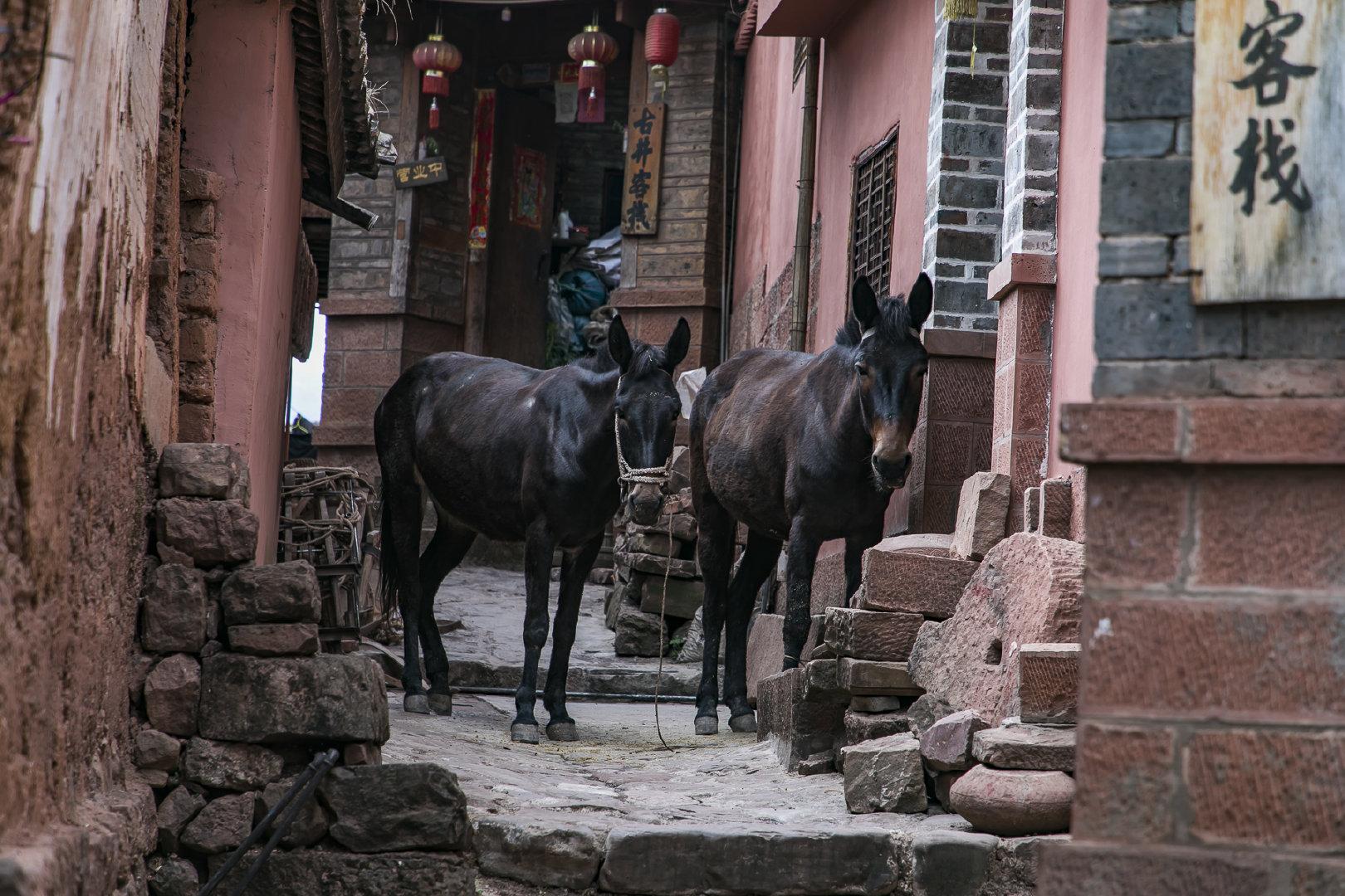 云南最新鲜的白族村村儿子村,凹隐蔽仟年盛产井盐,因火腿好吃名音远播