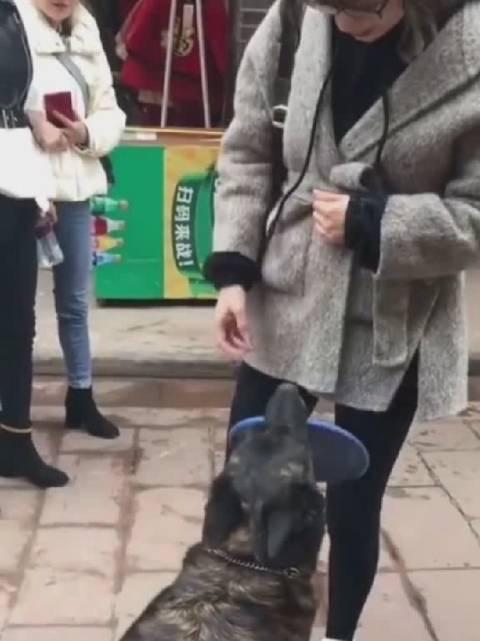 狗狗:免费玩嘛接飞盘游戏,真的可好玩了!