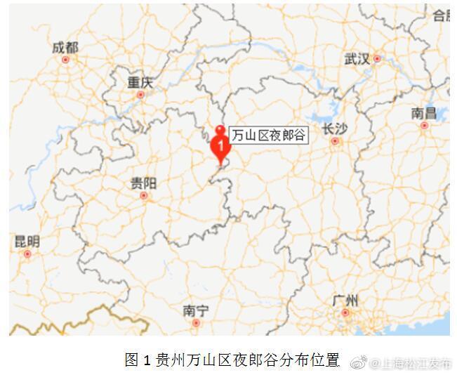 辰山植物园科研人员发现贵州最大野生蜡梅居群