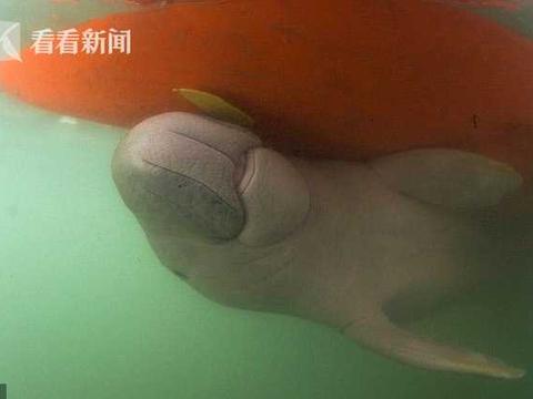 美人鱼宝宝身亡 解剖发现肠道里有大量塑料垃圾