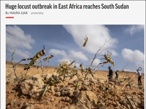 蝗虫侵入南苏丹,约旦宣布紧急状态