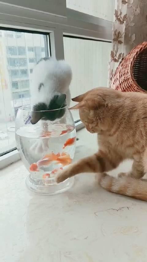 捞条小鱼儿补补身体吧!