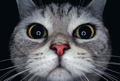 不小心点开前置摄像头的喵星人~大鼻头也能这么萌!