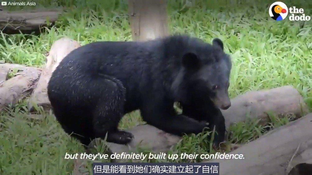 马戏团里的两只小熊崽崽被救出,从对人类的害怕恐惧