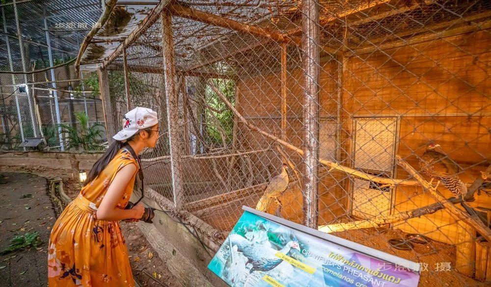 清迈夜间动物园(泰国清迈06)