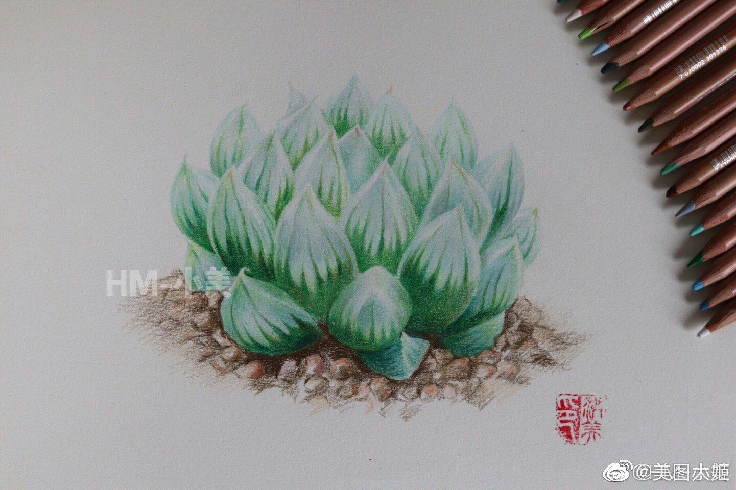 彩铅画手绘作品 多肉植物玉露作者@hm-小美
