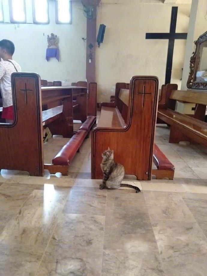 教堂出现一只认真的猫....