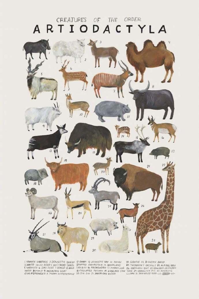 惟妙惟肖的动物插画手绘图谱 美国插画家 Kelsey Oseid