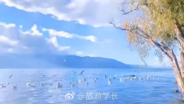 当地居民: 宅在家看泸沽湖海鸥他不想吗? ( @旅游学长 )