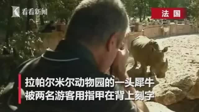 游客在犀牛背上刻字,引发众怒