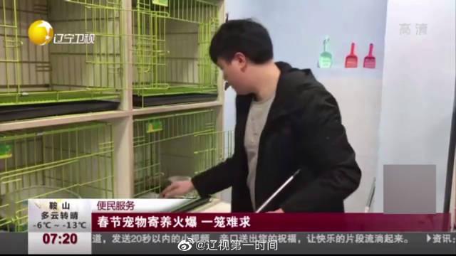 春节宠物寄养火爆 一笼难求