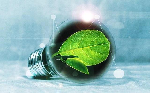 众所周知, 叶绿素是保护肝脏的佳品