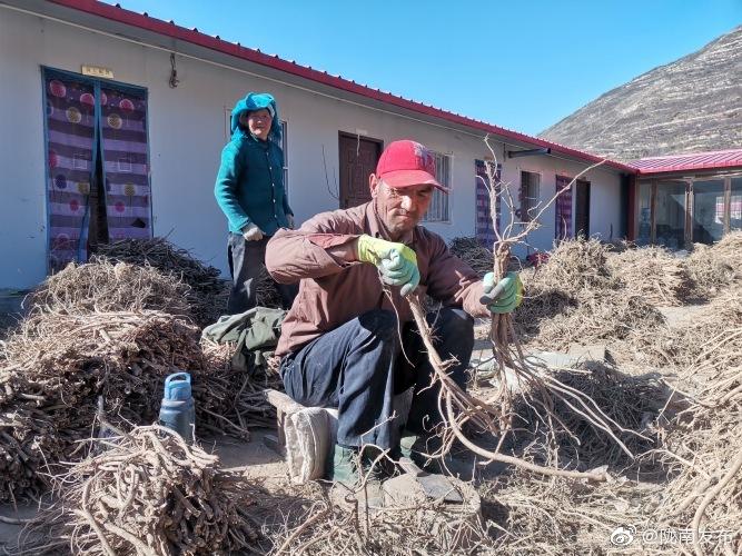 在哈达铺镇下罗村的哈达铺镇药乡农民专业合作社联合社里