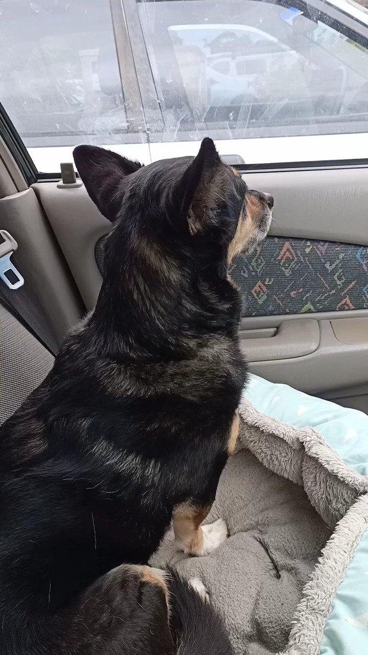 狗子想学消防车的声音,结果一开口就笑喷了