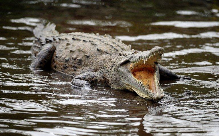 澳洲男子遭鳄鱼袭击,戳爆鳄鱼眼得以逃生